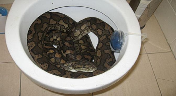 Ep. 140 ToiletSnakeApocalypse