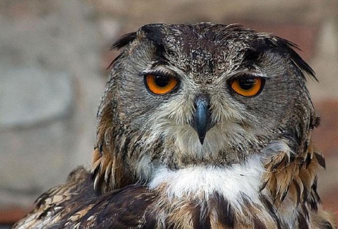 Ep. 171 Owl Hoot