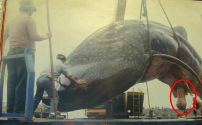 Ep. 193 Whale Balls