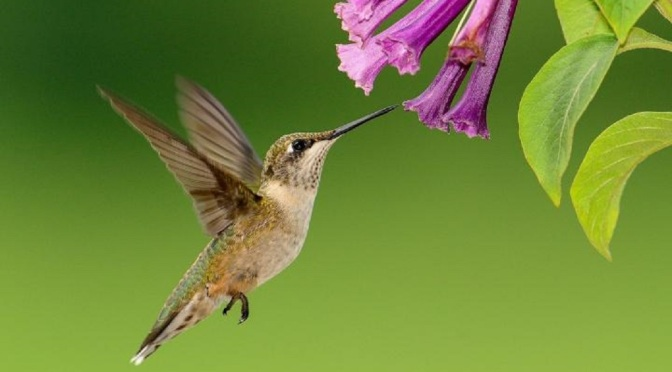 Ep. 265 Hummingbirds Like Sweet Things