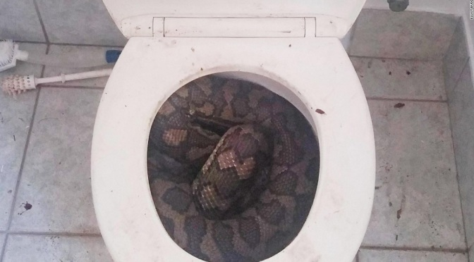 Ep. 270 2020: The Year of the Toilet Snake